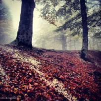 strada per il catria. nei pressi dell'infilatoio. foliage autunno 2013.