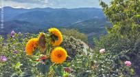 palcano. ca' berardino. guardando l'orizzonte verso le serre di burano. estate 2014
