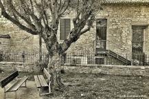 l'albero di tutti. parco della rimembranza. autunno 2013.