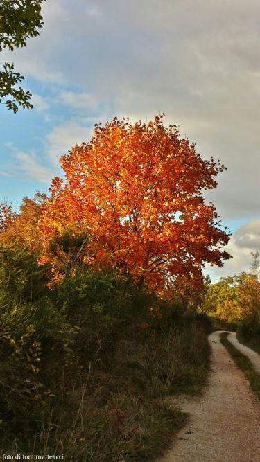 autunno. lungo la strada che dal monte petra scende a pontericcioli. 2014.