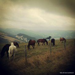 monte petrano. cavalli. autunno 2012.